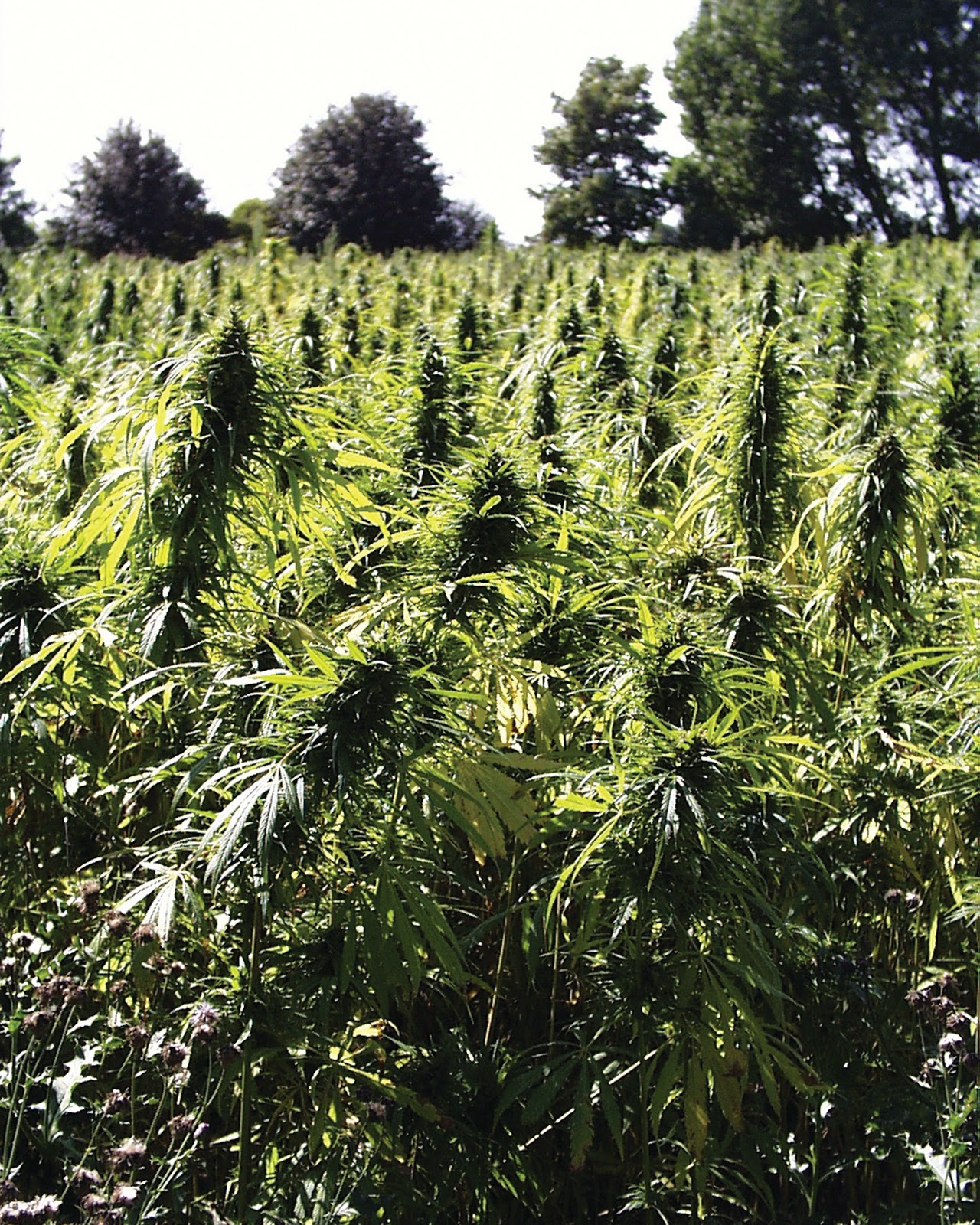 how-i-started-a-1m-month-hemp-products-company-that-is-publicly-traded-in-australia