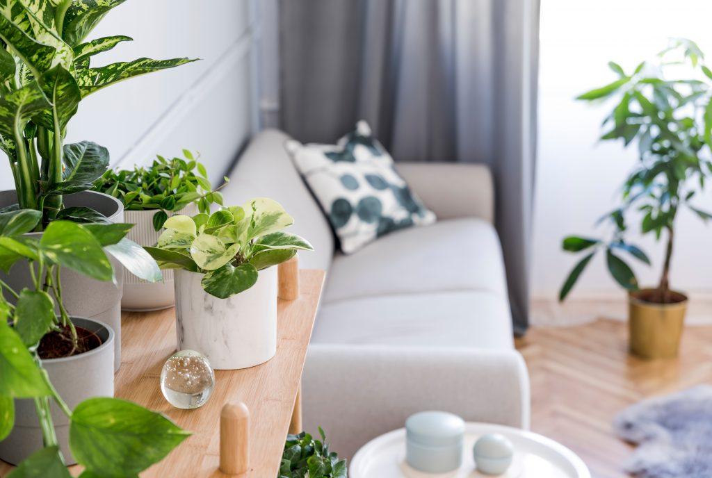 Plantas em casa: o que você precisa saber