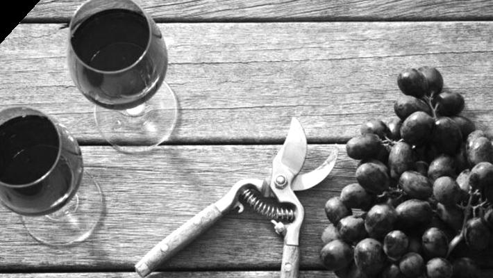 Food & Beverage Ecommerce Case Study (Vivino)
