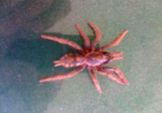 Eliminamos Insectos Rastreros, Masticadores y Voladores