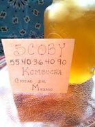 Kombucha Probióticos SCOBY Búlgaros de Leche Yogurt Kéfir Natural y Tíbicos de Agua