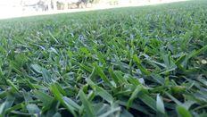 Venta de pasto en rollo y tierra de jardin. (Cesped natural)