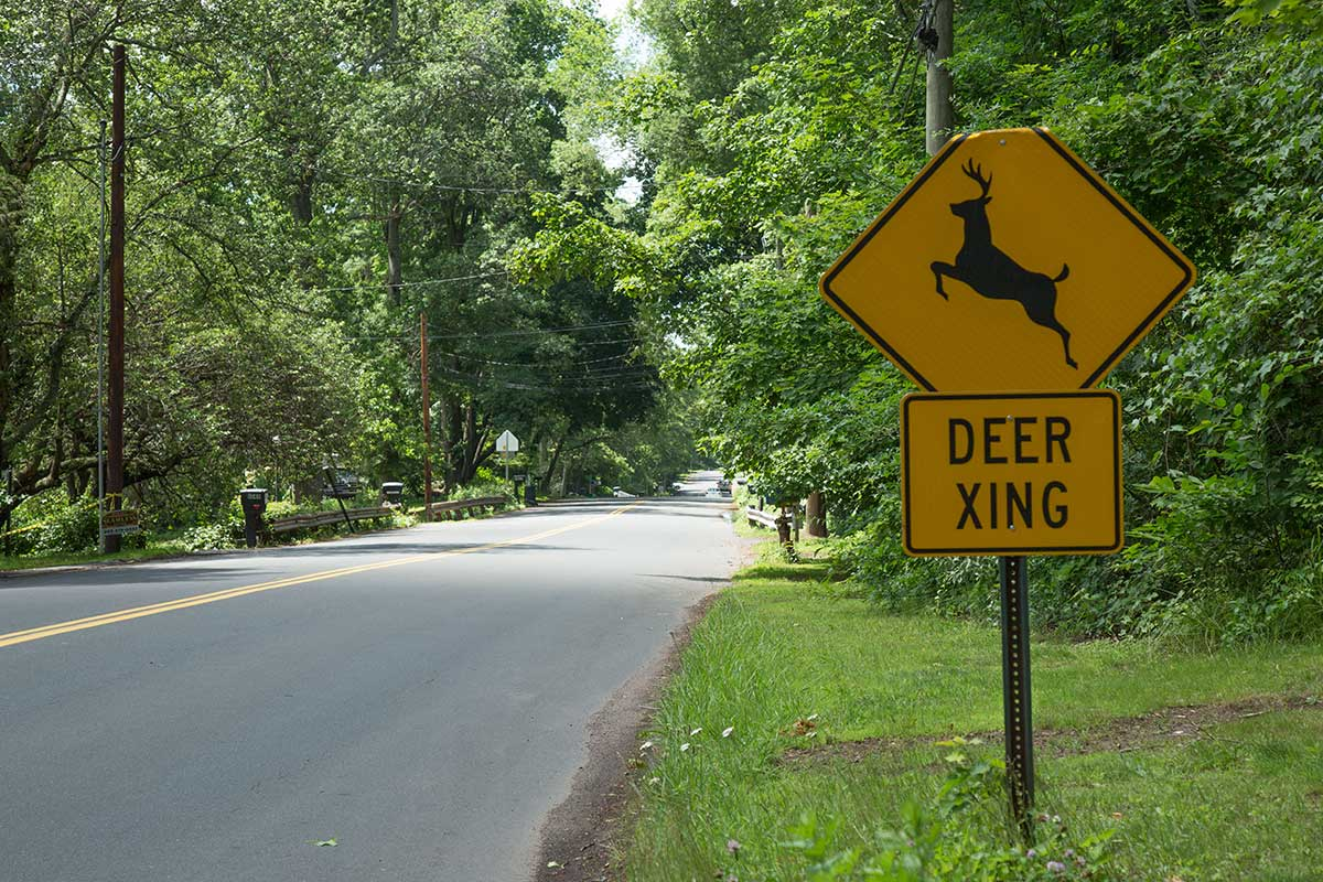 A deer crossing sign in New Haven, Connecticut. Deer have helped spread blacklegged ticks throughout the United States.