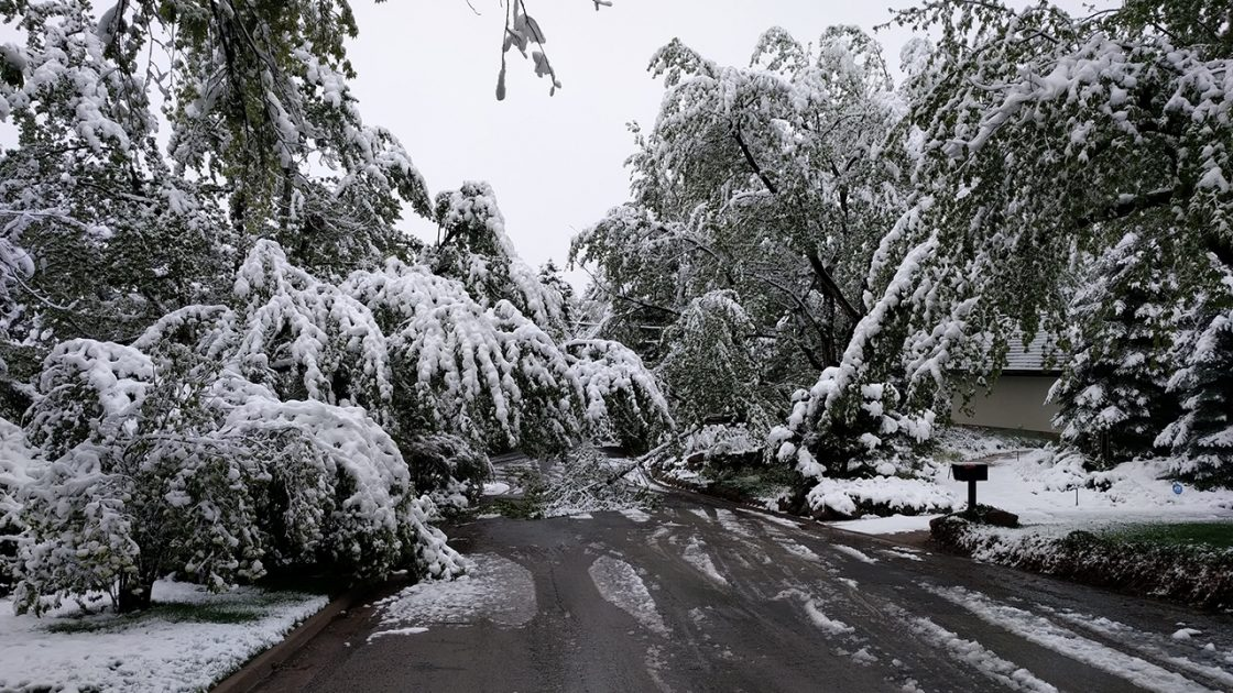 "Trees groan under the weight of snowfall in Boulder, Colorado, on Tuesday morning, May 21, 2018. Snow totals of 3"" to 7"" were widespread from Denver to Boulder. Some 10,000 Colorado customers lost power during the storm, according to Xcel Energy. (Richard Rotunno)"