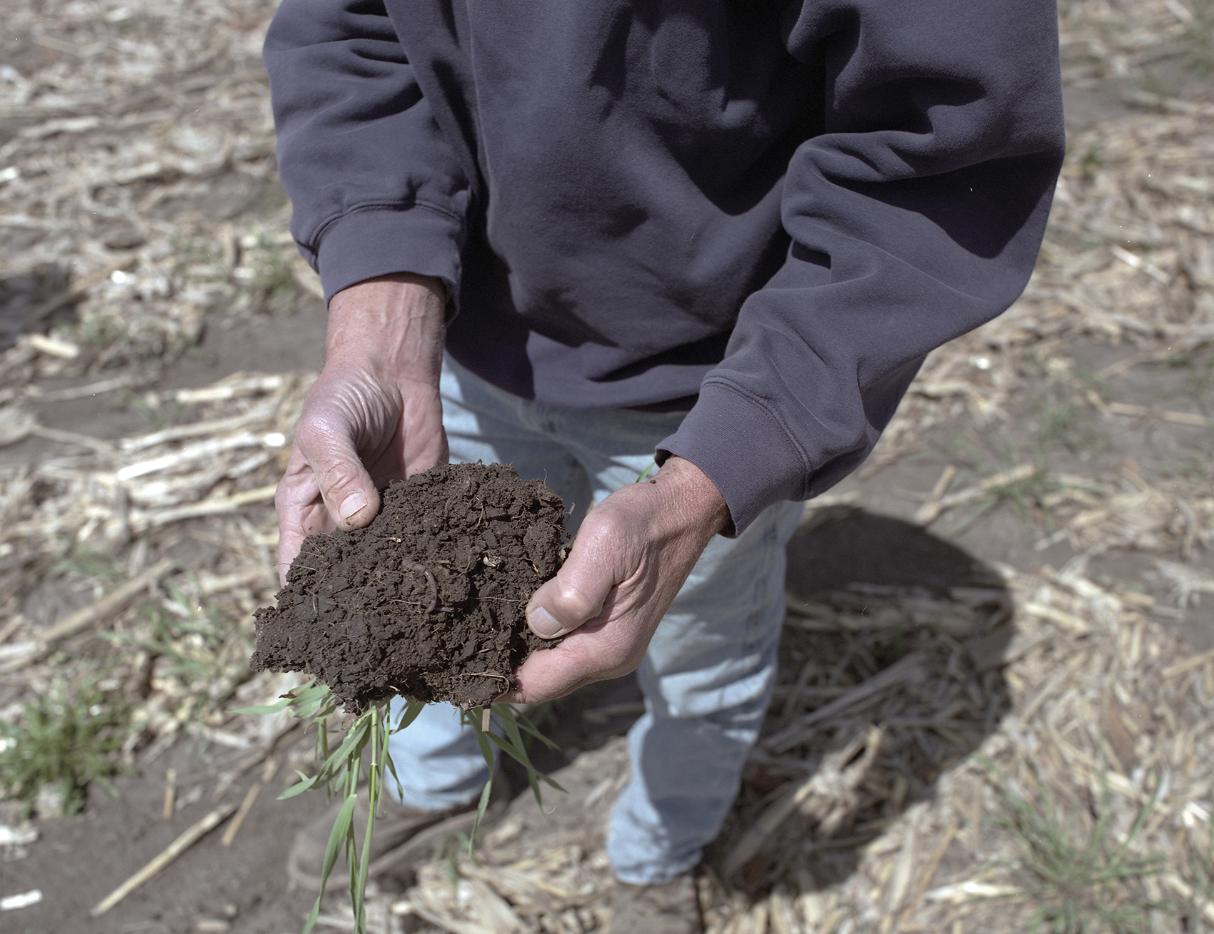 With a dirt stained spade Tim Little scythes through the topsoil, levering up clods of earth, prying them apart to show earthworms and new root systems. There are other benefits to cover crops, but they're hard to quantify, and happen over a long timeframe. After five to seven years farmers report better soil health, and a higher yield in their primary crops of corn and soybean.