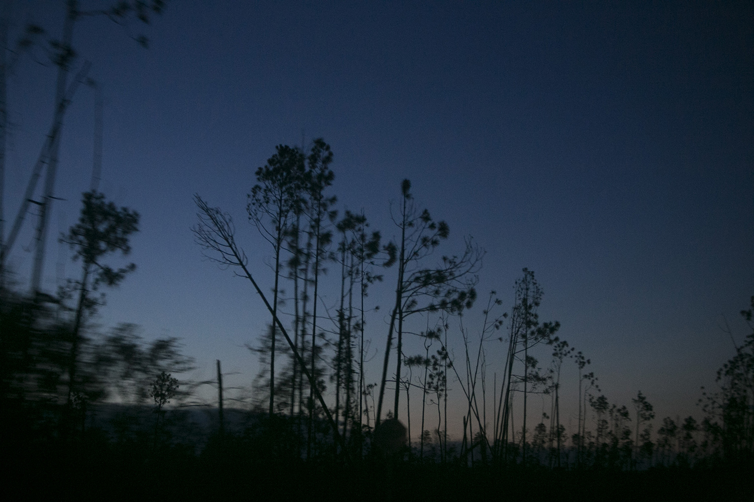 Trees are seen snapped by Hurricane Michael along a highway outside of Panama City, Fla. Forests in the devastated area were leveled leaving behind patches of trees, many of them snapped in half.