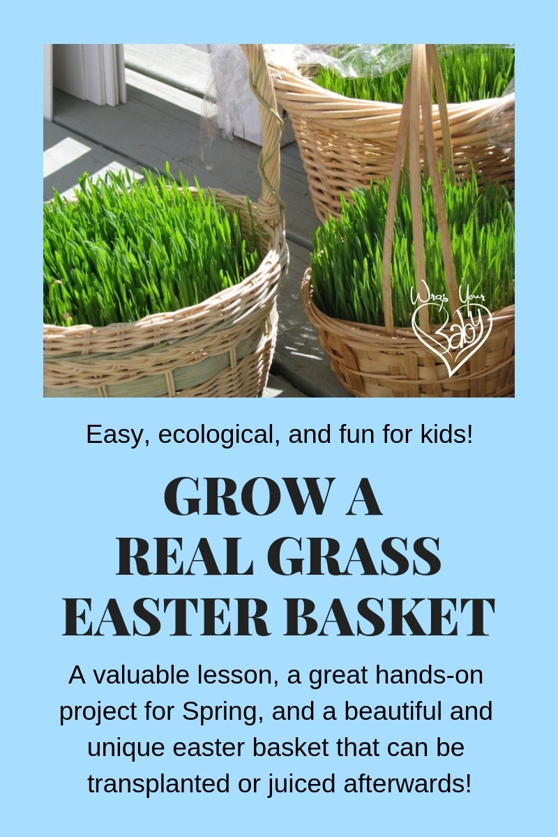Gorw a Real Grass Easter Basket