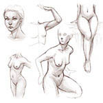Learn to draw female anatomy