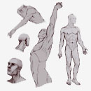 Learn to draw male anatomy