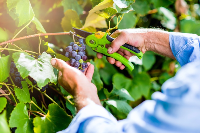 Organic food benefit