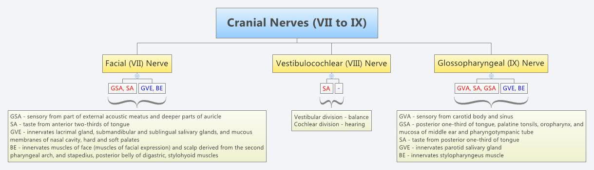 Cranial Nerves Vii To Ix Xmind The Most Popular Mind Mapping