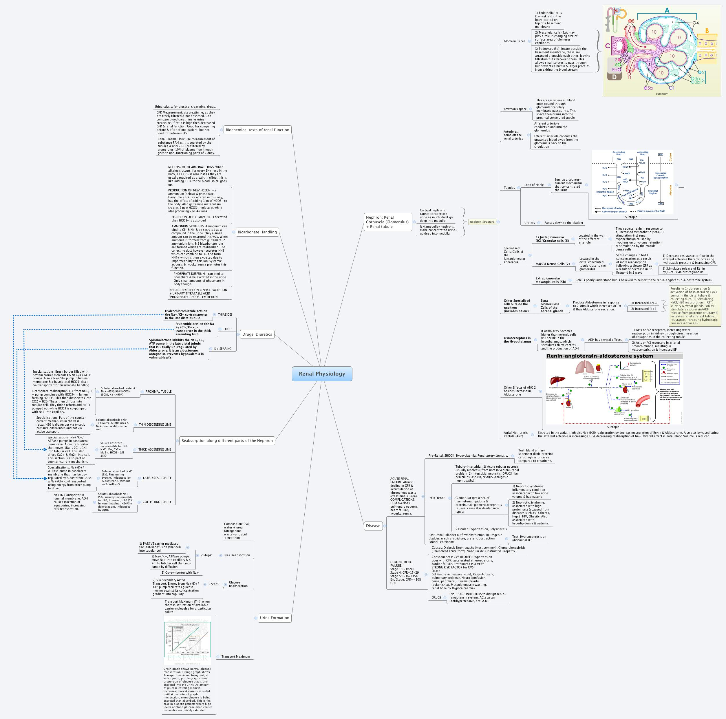 Concept Map Renin Angiotensin Aldosterone Mechanism.Renal Physiology Xmind Mind Mapping Software