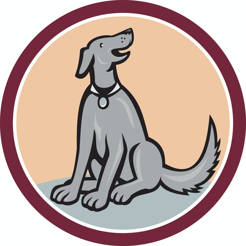 Professional dog trainers miami