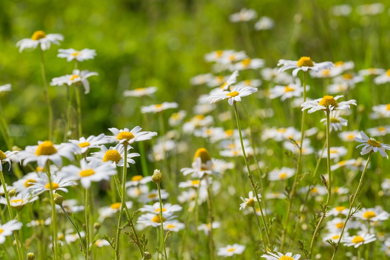 Garden landscaping supplies maryland