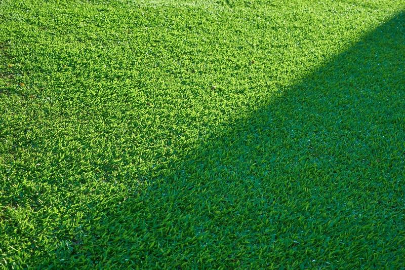 Organic lawncare treatment