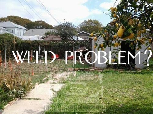 Weedproblem1