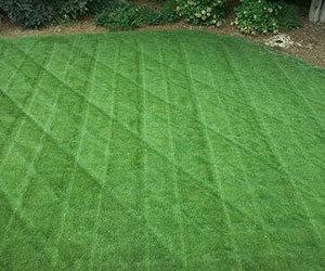 Lawn care service charlotte