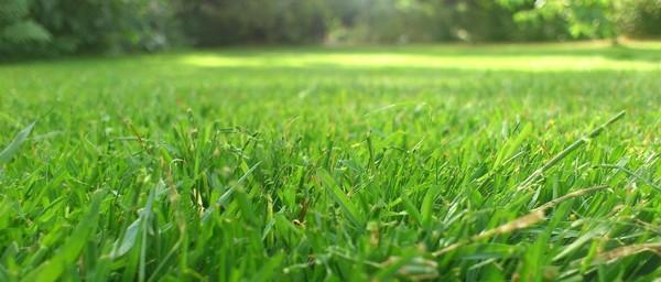 Grass slider 1170x500