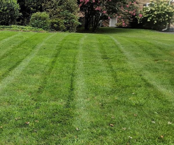 Grassservice