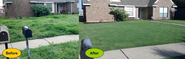 Lawncare03