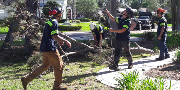 Treeco tree removal experts jacksonville