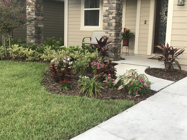 Front yard 11