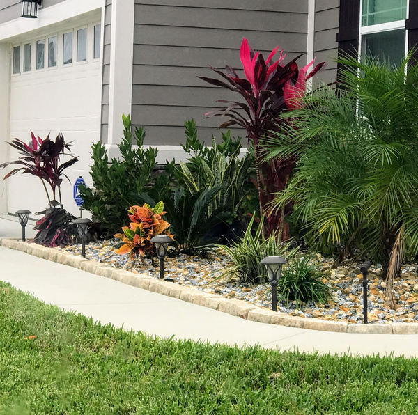 Front yard 4