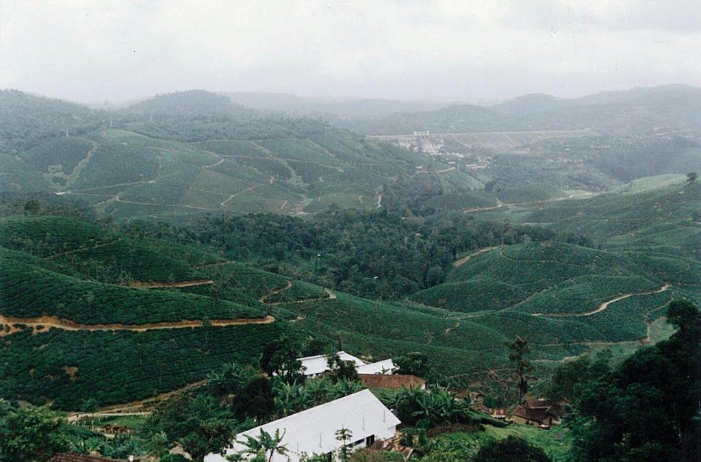 Manjapettai – Yellow Ridge