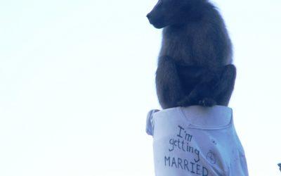 Committing matrimony