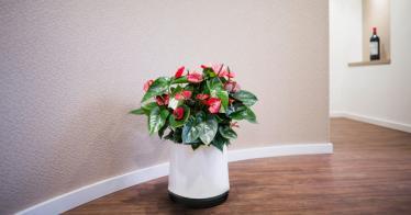 Innovativer Blumentopf AIRY macht die Luft nachweislich rein