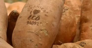 Verpackungsaufdruck ohne Plastikverpackung: Rewe testet Laser-Etikettierung auf Gemüse