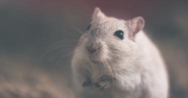Die Maus - inspirierende Kurzgeschichte über unsere Ängste