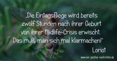 Eintagsfliege vs. Midlife-Crisis Eintagsfliege vs. Midlife-Crisis | Zitat Loriot