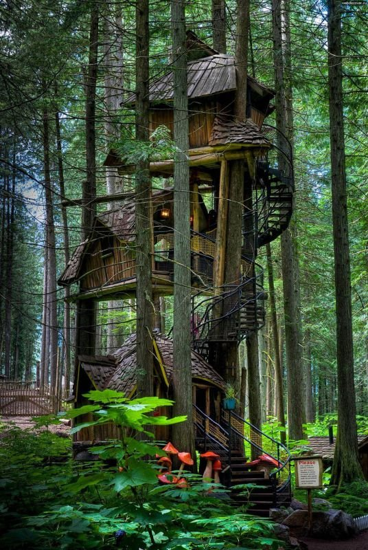 Drei Geschichten Baumhaus, Kanada | Quelle: http://imgur.com/gallery/NOlPZGF