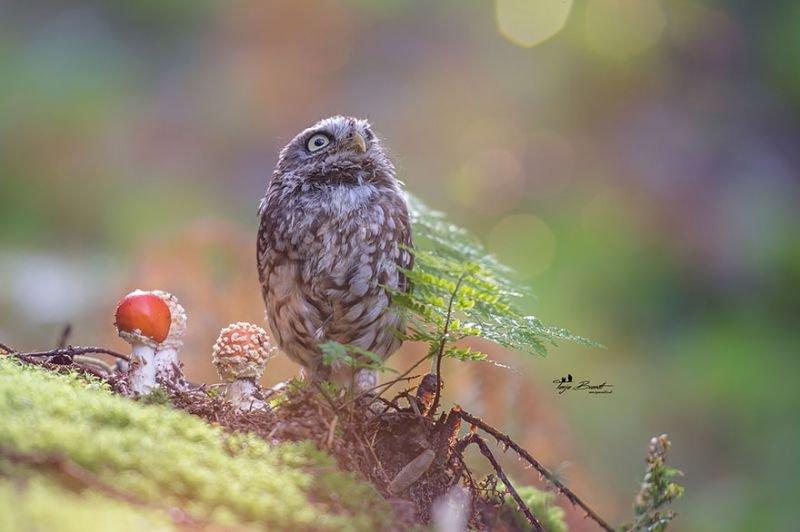 Copyright: Tanja Brand   http://www.boredpanda.com/owl-hiding-from-rain-mushroom-podli-tanja-brandt/