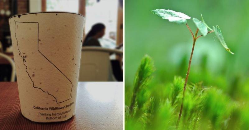 Kaffee To Go Becher einpflanzen | Quelle: https://www.kickstarter.com/projects/reducereusegrow/the-worlds-first-plantable-coffee-cup