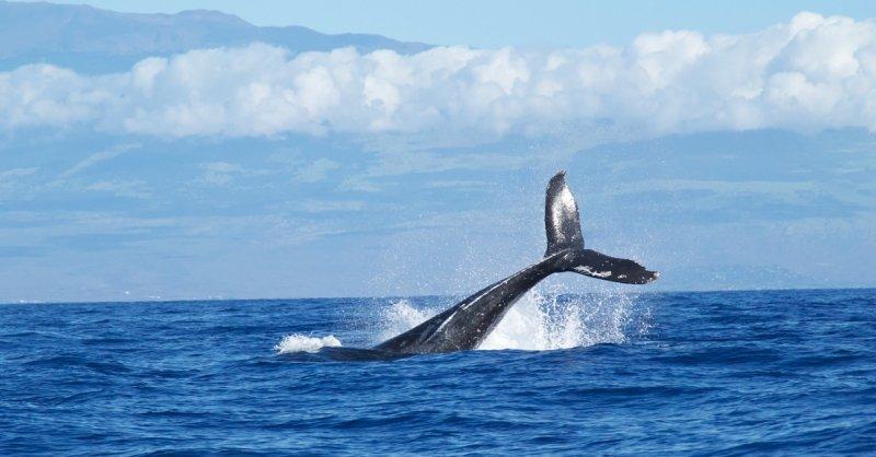 So reagieren Wale auf Flötenmusik - Foto: Abigail Lynn   Unsplash.com