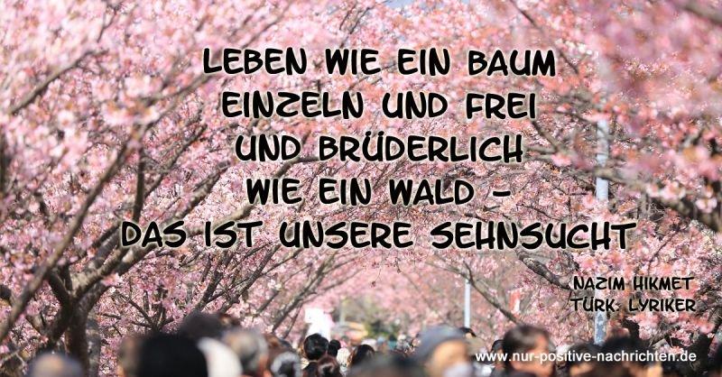 Positive Nachrichten Quelle Hintergrundbild: unplash.com