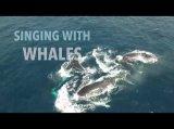 Singing with Whales https://www.youtube.com/watch?v=eDra_bd6Wu0