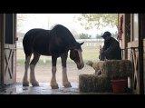 "Budweiser USA: #BestBuds | 2015 Budweiser Super Bowl Commercial ""Lost Dog"""