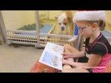 Kinder lesen Hunden im Tierheim vor | Nur positive NachrichtenTV