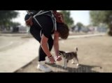 Aslan and Rose: A Syrian Boy Refugee Journey With His Beloved Dog