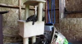 Heaven's Gate Animal Rescue 2014