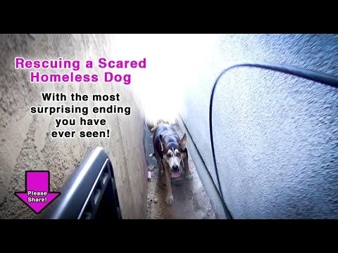 We Thought We Were Rescuing One Dog, But We Were In For A HUGE Surprise! Please Share!