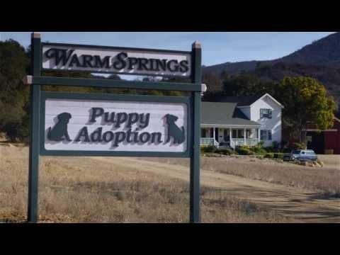 "Budweiser USA: Super Bowl XLVIII Commercial | ""Puppy Love"""