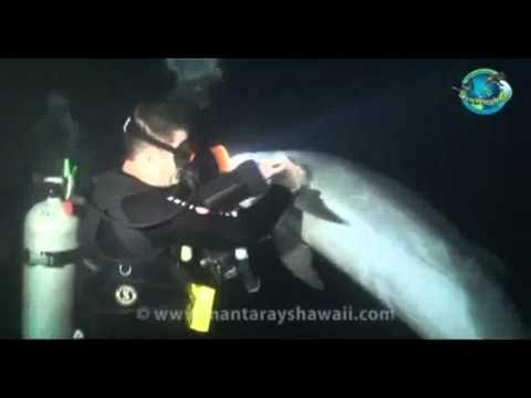 intelligentes Verhalten der Tiere - Delfin bittet Taucher um Hilfe