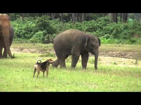 Positive Nachrichten aus dem Tierreich: Elefant und Hund spielen