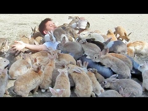 Guy Gets Smothered by Bunnies on Japan's Rabbit Island!