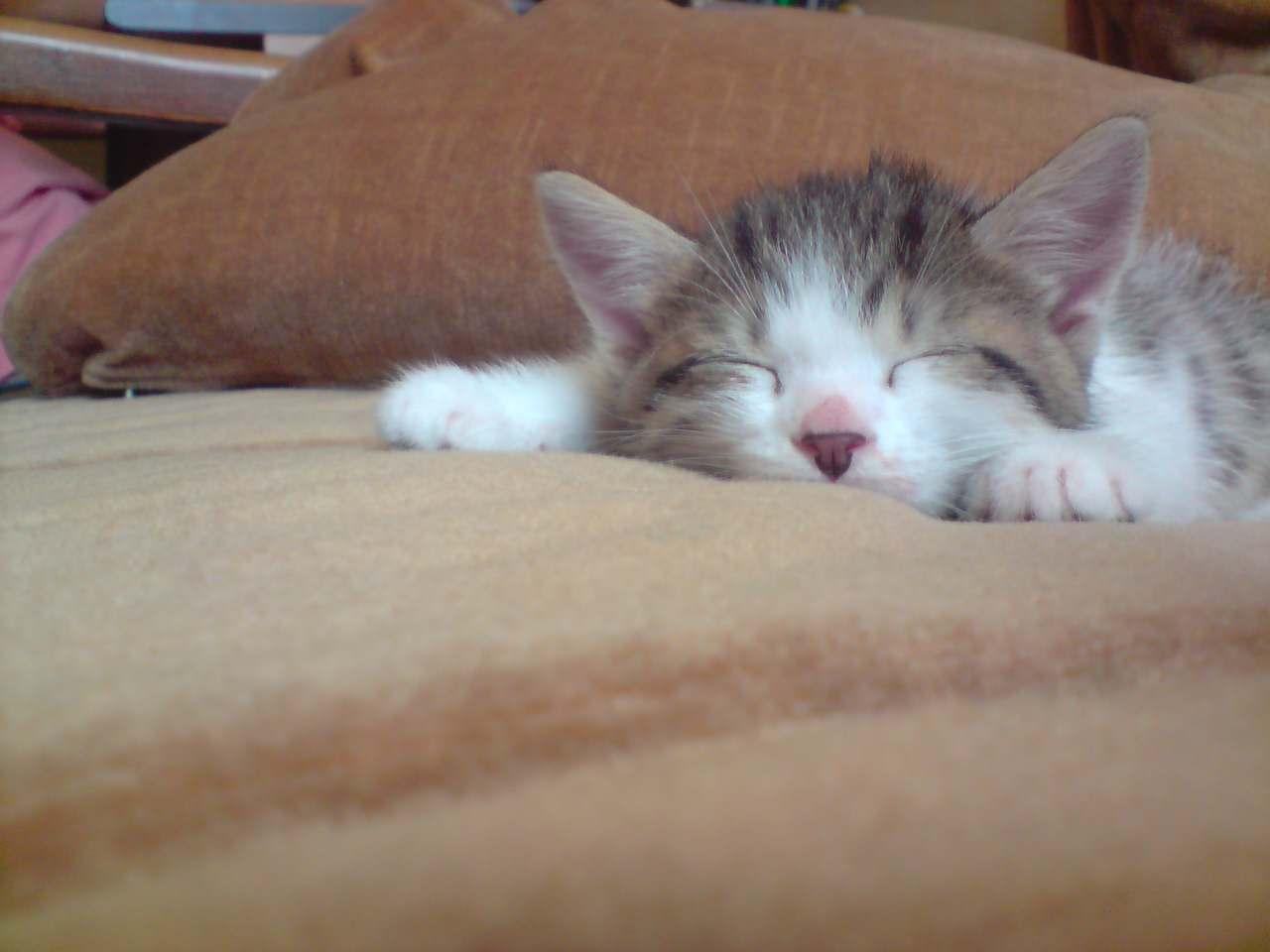 Grosmi qui dort sur le canapé.