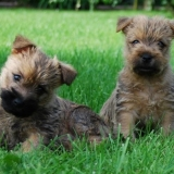 La team des  terriers ;)